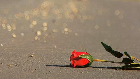 Eine Rose liegt auf dem Asphalt. (Link zu Informationen über KIK und Wegweisung)