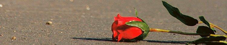 Eine Rose liegt auf dem Asphalt.