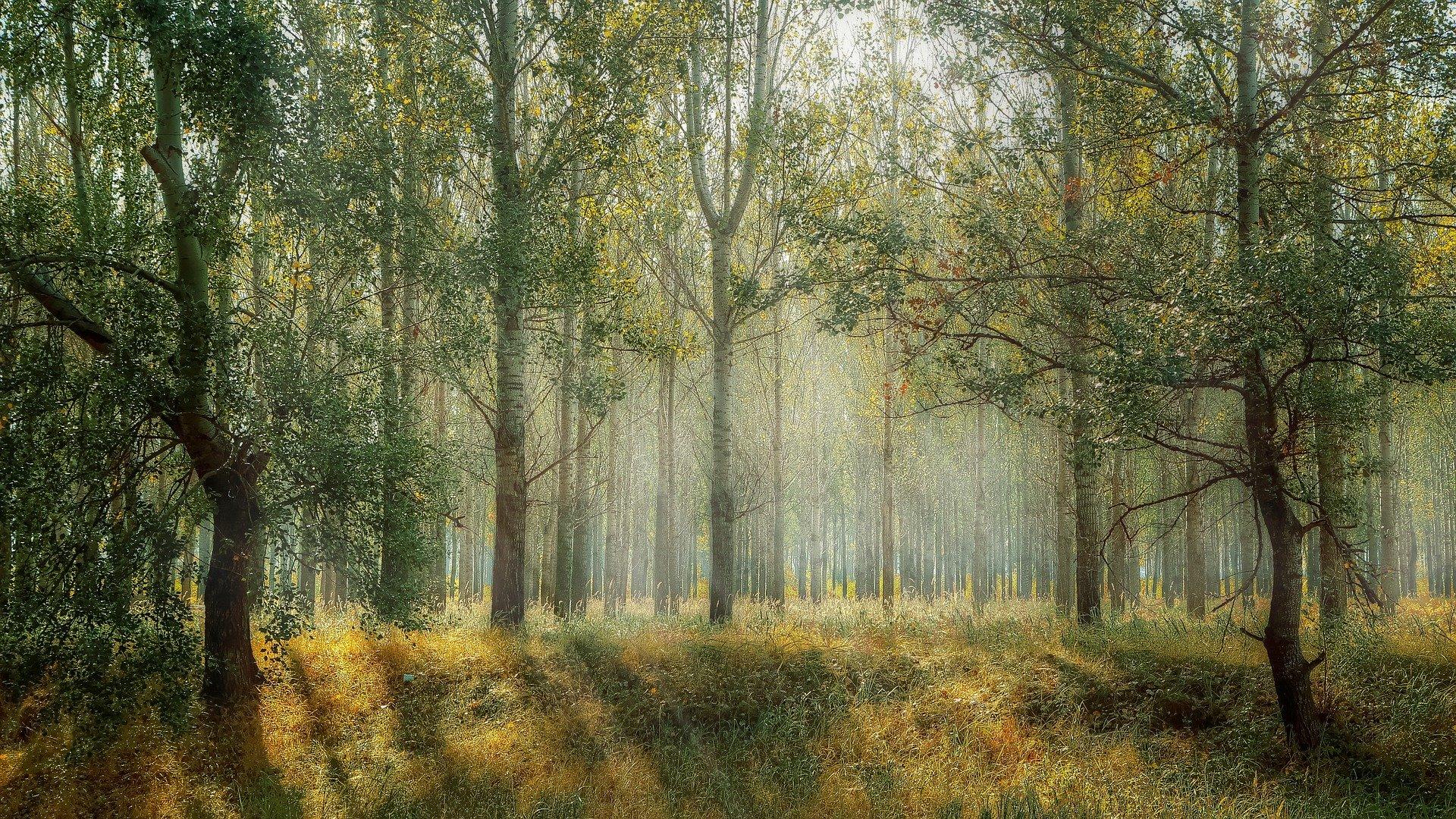 Entspannungsbild Wald